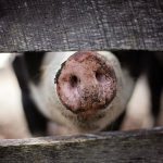 「三匹の子豚」 真梨幸子