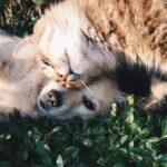 「黄泉路の犬---南方署強行犯係」 近藤史恵